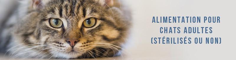 alimentation pour chats adultes