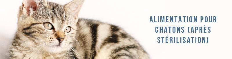 alimentation pour chats junior après la stérilisation