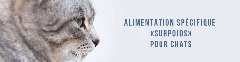 alimentation spécifique pour chats en surpoids