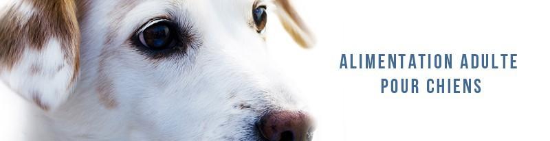 alimentation pour chiens adultes