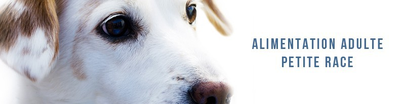 alimentation pour chiens adultes de petite race