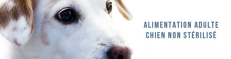 alimentation chiens adultes non stérilisés moyenne et grande race