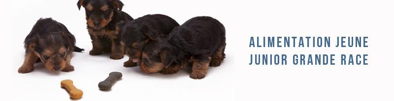 alimentation junior pour chiens de grande race