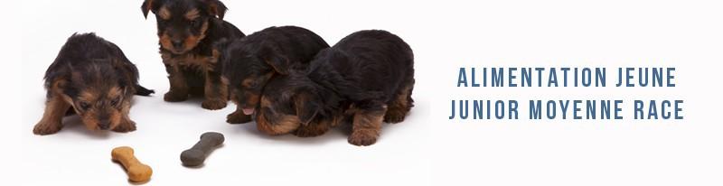 alimentation junior pour chiens de race moyenne