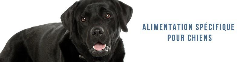 alimentation spécifique pour chiens