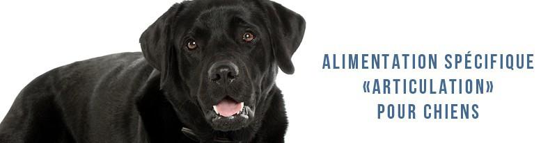 alimentation spécifique articulation des chiens