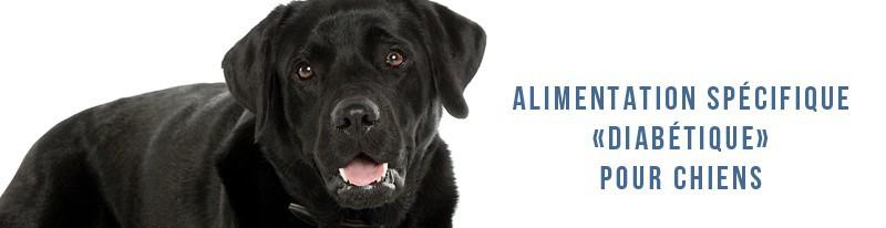 alimentation spécifique diabétique pour chiens