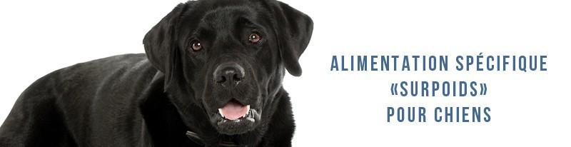 alimentation spécifique pour les chiens en surpoids