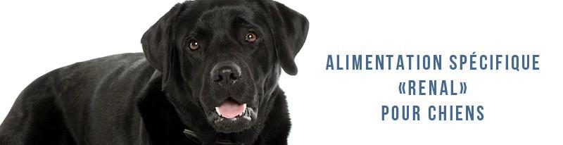 alimentation pour chiens ayant des problèmes rénaux
