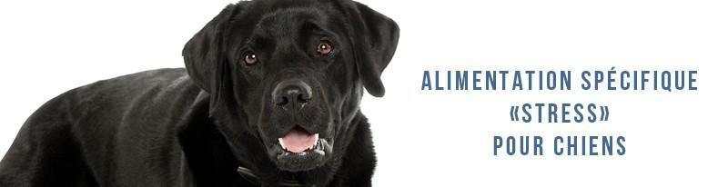 alimentation pour chiens stressés